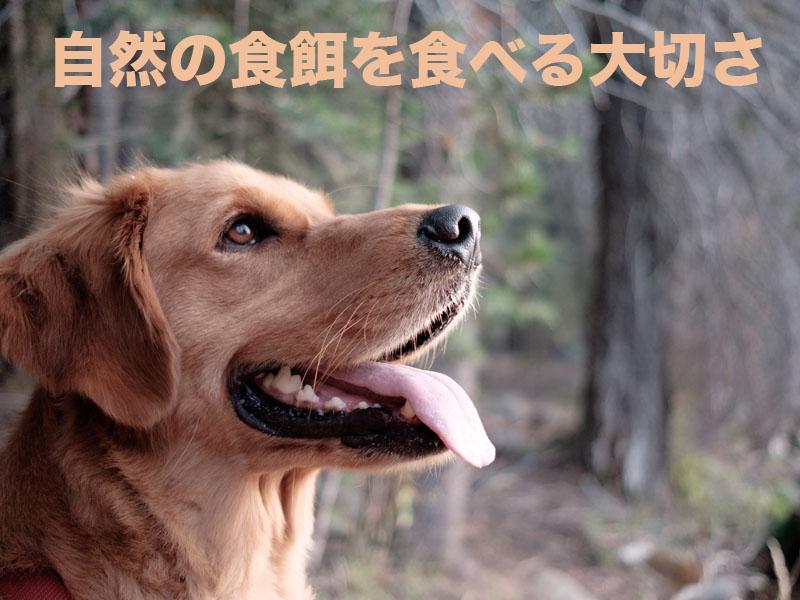 ジビエ_Dog meal